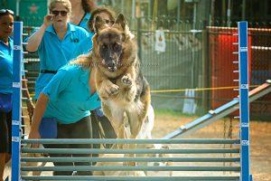 Binbrook Fair 2017 Dog Jumping